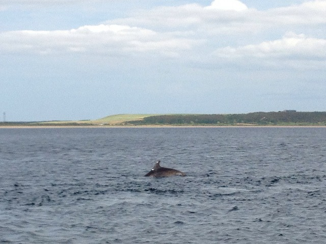 inverness day trips - chanonry point dolphins