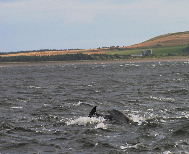 dolphin watching black isle scotland