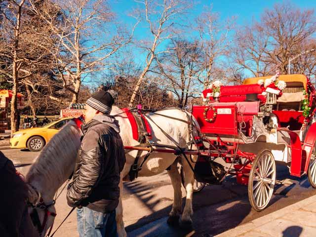 horse drawn carraige central park